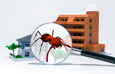 yearly pest control inspection for investment properties